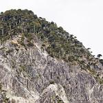 Conguillio National Park, Araucania, Chile © Claudio F. Vidal, Far South Expeditions, Chile | www.farsouthexpeditions.com