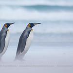 © Alex Macipe, Far South Expeditions