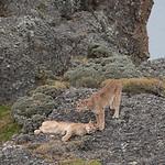 Torres del Paine National Park, Patagonia, Chile © Enrique Couve, Far South Expeditions