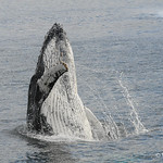 © Whale Sound