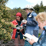 Botanizing in the Patagonian Andes with plant expert Claudia Guerrido © Claudio F. Vidal, Far South Expeditions - www.farsouthexpeditions.com